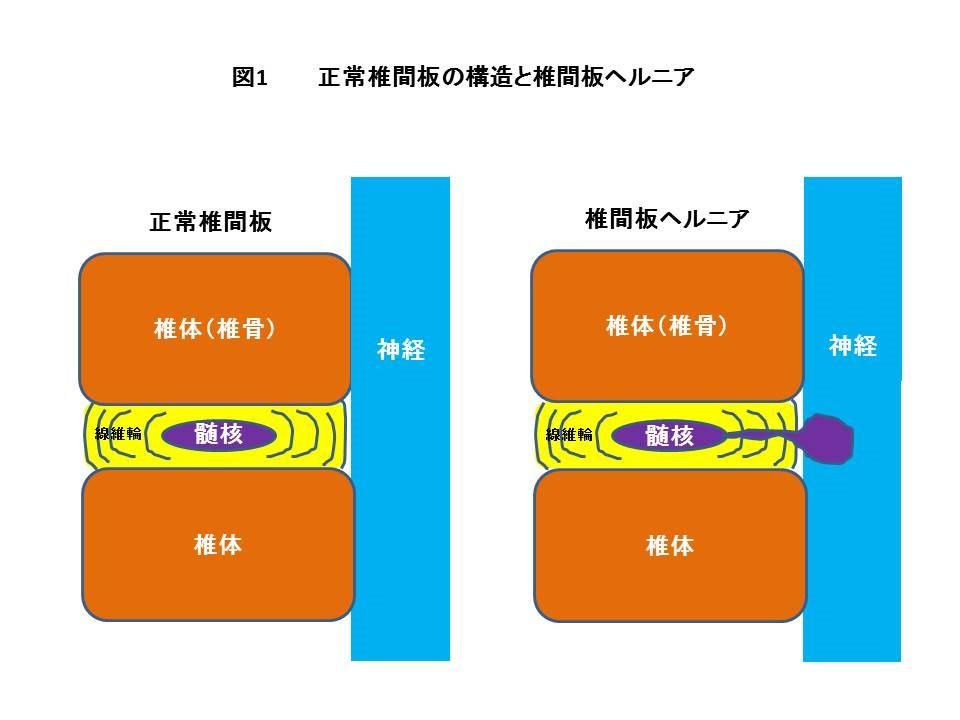 shiraishi-cl